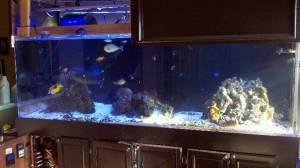 Giant Aquariums 400 Gallon Acrylic Reef Ready