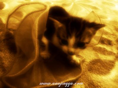 gambar anak kucing comel