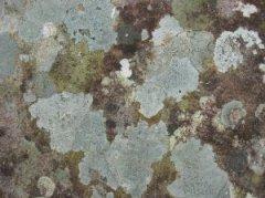 Humedades elim nalas t mismo la importancia de limpiar - Eliminar moho paredes ...