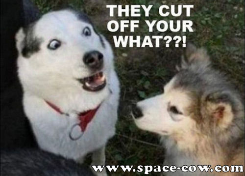 Funny Animals Picture Shocked Dog