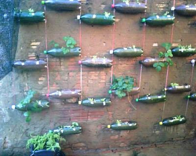 Horta, alimento, reutilização de garrafas PET
