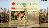 NOVA WEB DE SEFEDFRUITS 2013