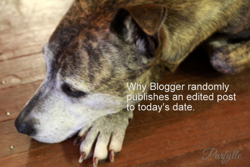 Geri the wonder dog's response to unexpected blog date changes