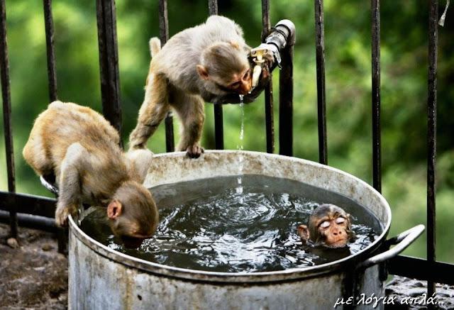 μαϊμού-δροσιστικό μπάνιο-αστείες εικόνες