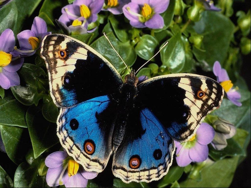http://1.bp.blogspot.com/-2EZ3YFSBcoM/TkjIt7cz5lI/AAAAAAAAFME/WQonnPbAzBo/s1600/butterfly-wallpaper-1.jpg