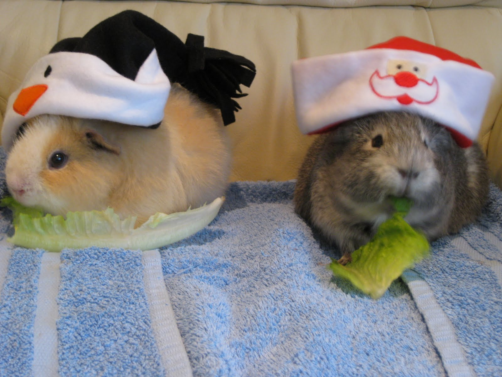 Undercover guinea pigs merry pigmas from agents ghost and iron hamster - Hamster agent secret ...