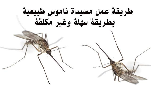 طريقة رائعة للتخلص من الحشرات والناموس في المنزل ! شاهدها