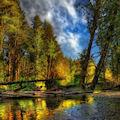 Paisaje en el Bosque