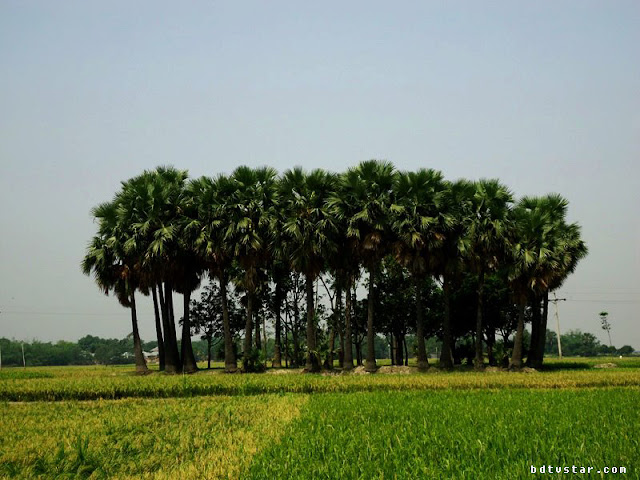 beautiful places in rajshahi