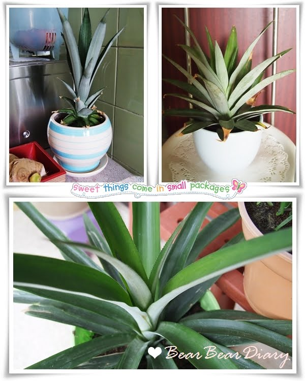 Bear bear diary growing a pineapple house plant for Plants that need little care