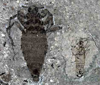 http://sciencythoughts.blogspot.co.uk/2012/03/giant-fleas-from-jurassic-of-china.html