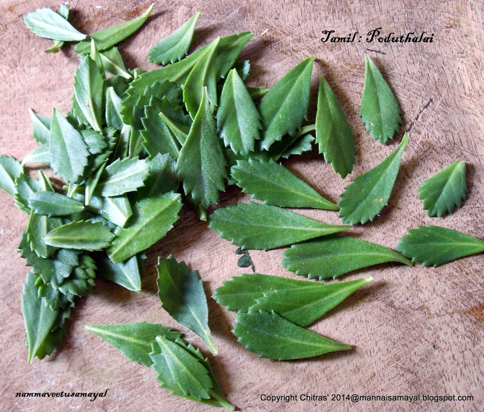 Poduthalai [Frog fruit or Purple Lippia Leaf ]