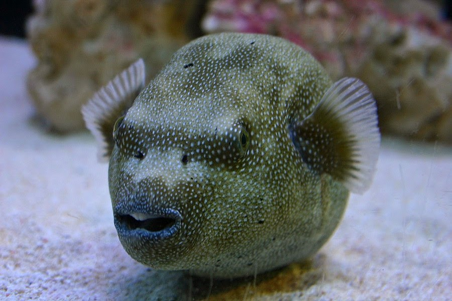 Weird Unique Fish Photo Collections All About Photo