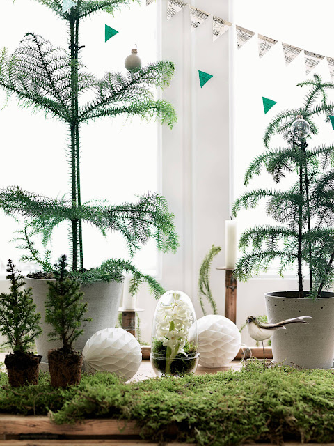 Petra Bindel photography for Elle decor