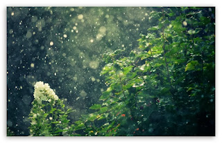 Green, Rain, Forest, Summer