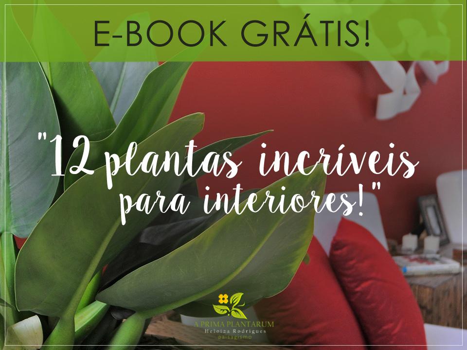 BAIXE GRÁTIS SEU E-BOOK: 12 Plantas incríveis para interiores