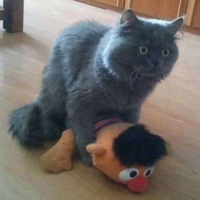 Katze auf Ernie