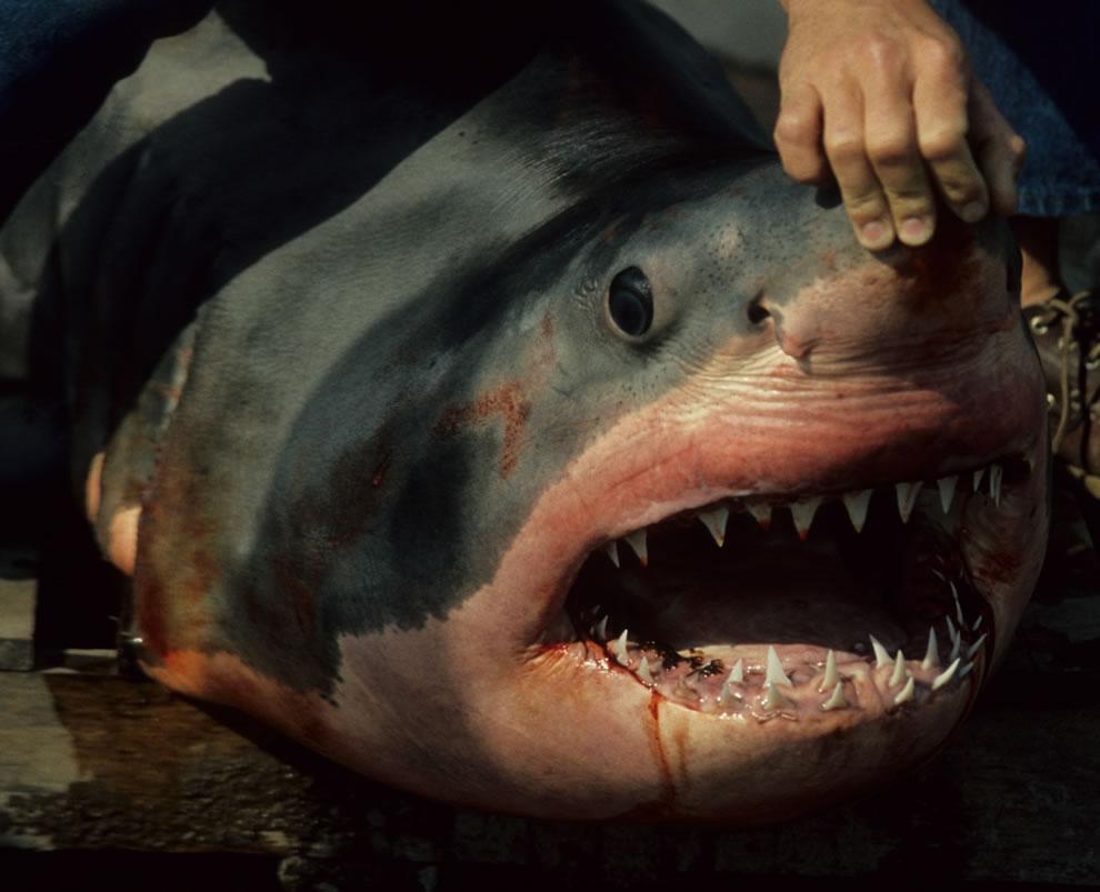 اسماك القرش تحت الماء sharks-teeth-om-nom-