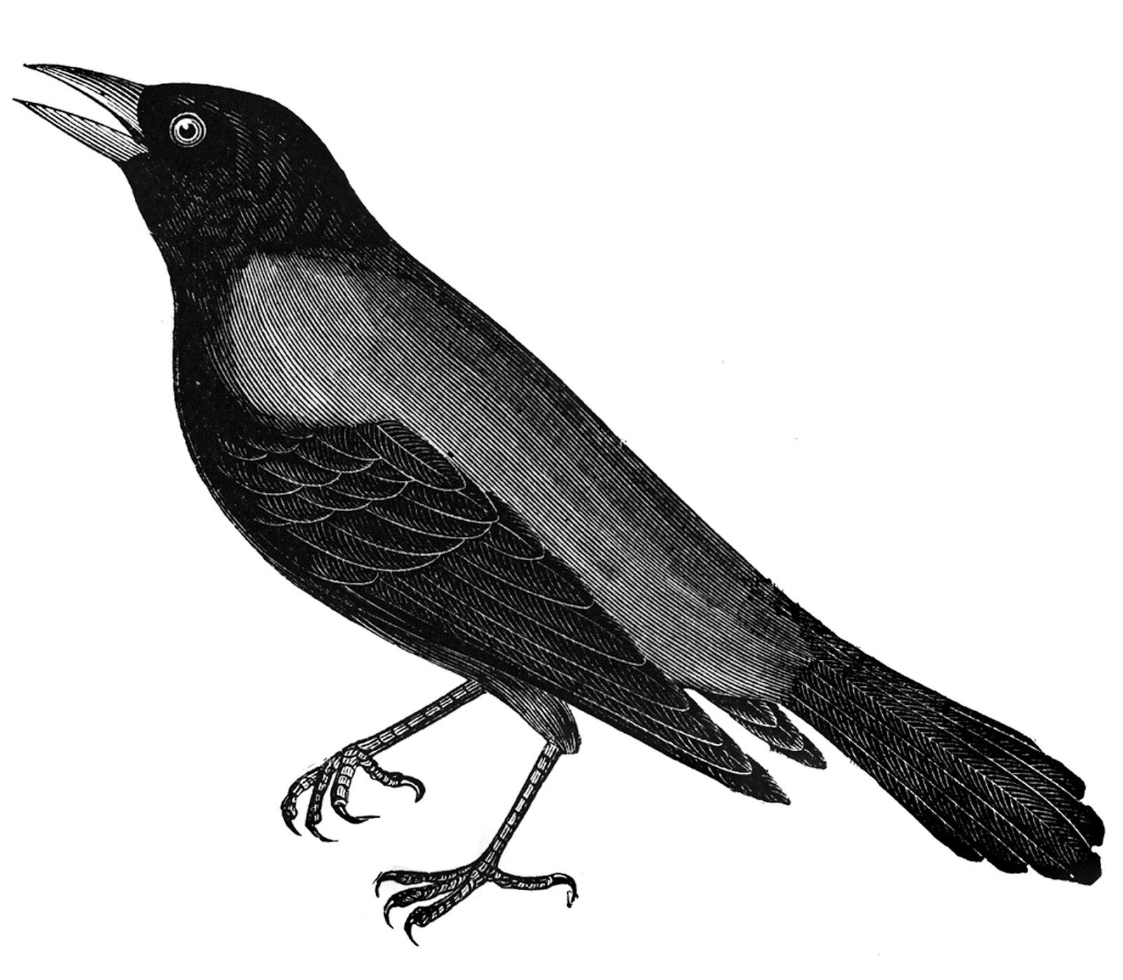 http://1.bp.blogspot.com/-2GQWWbiuz2A/UADHPQIdR6I/AAAAAAAAFoA/AP6_rOdwSfI/s1600/free+vintage+digital+stamp_black+crow.jpg