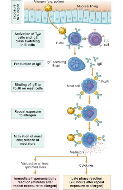 do inhaled steroids suppress immune system