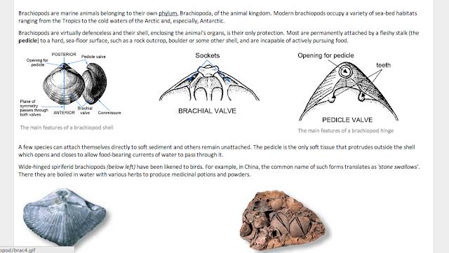 fossils online database