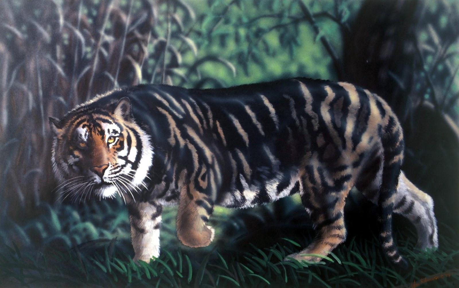 Tiger Panther Hybrid Www Pixshark Com Images Galleries