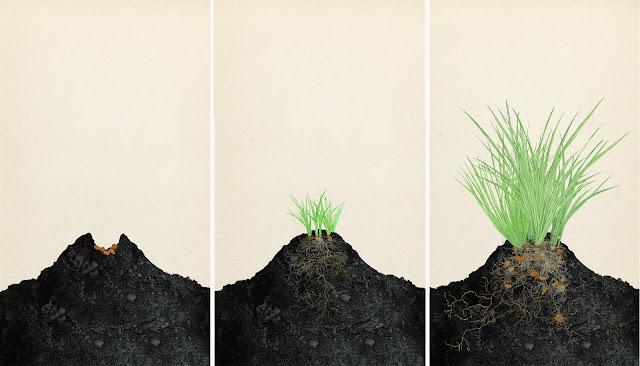 crecimiento de la chufa, etapa uno. dibujo