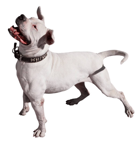 Dog Anti Barking Devose