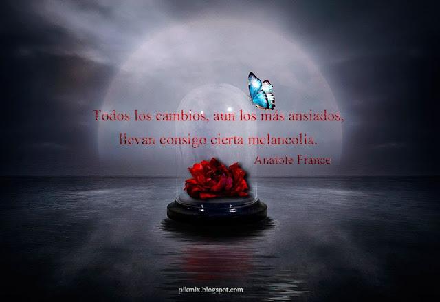 Cierta melancolía ~ Frases para facebook ~ La mariposa y la flor