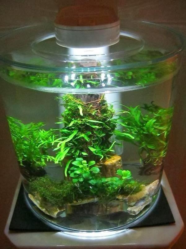 a night by the aquarium marina 360 aquarium. Black Bedroom Furniture Sets. Home Design Ideas
