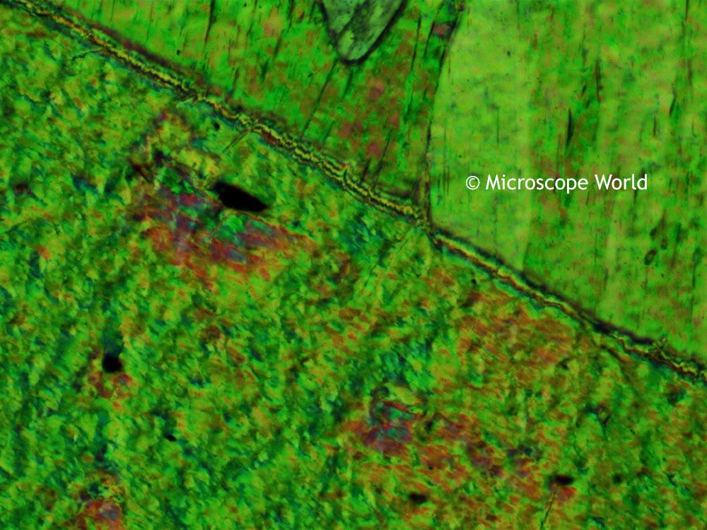 Tremolite under the polarizing microscope utilizing the polarizer and analyer.