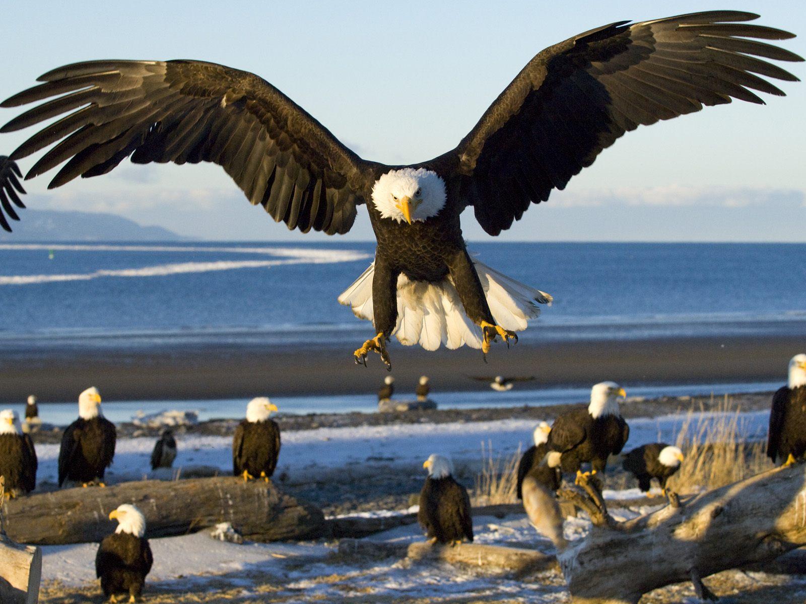 eagles - photo #15