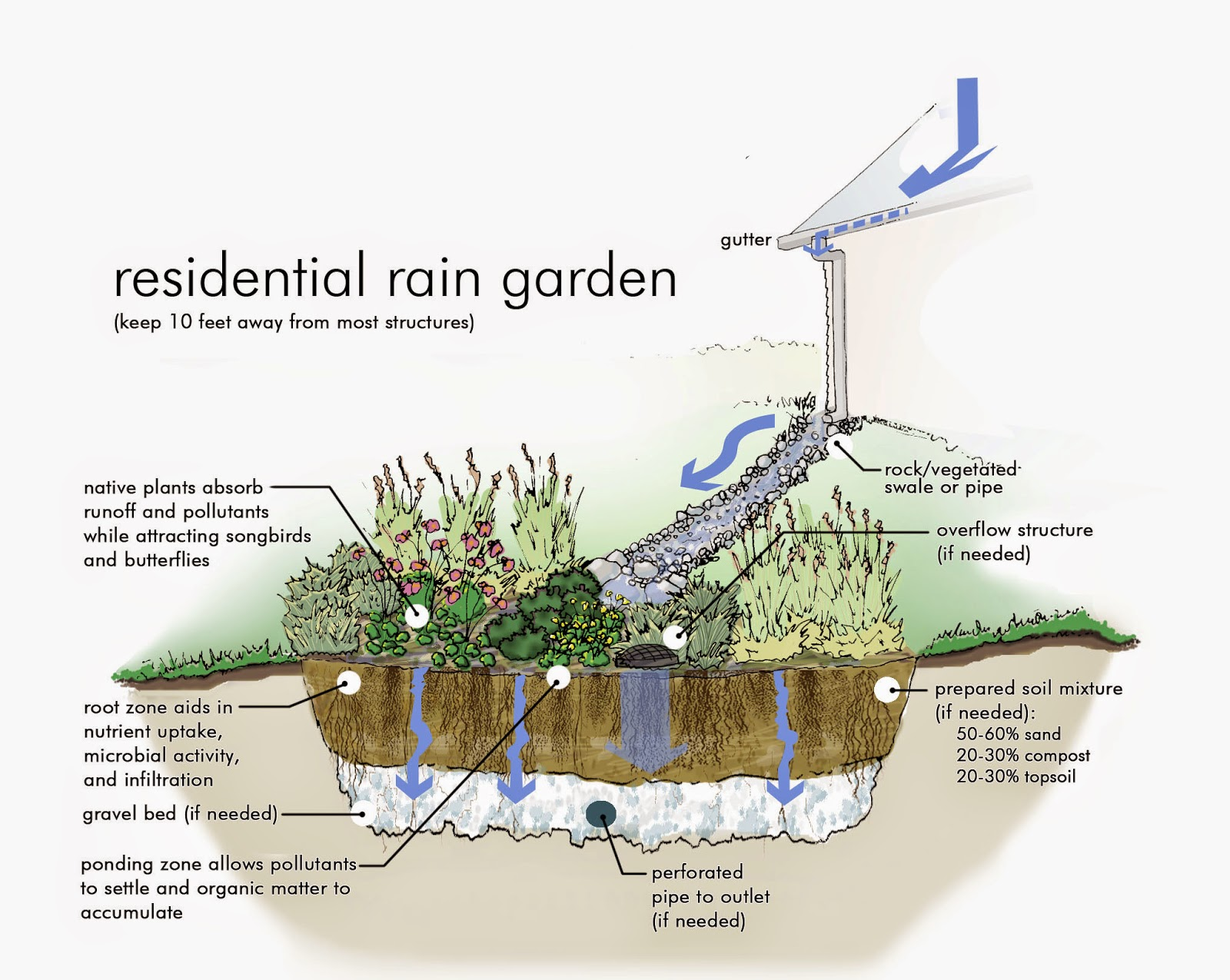 Rain gardens absorb runoff and reduce pollutants
