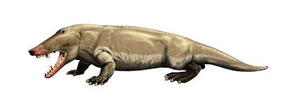 cetaceos de la prehistoria Ambulocetus