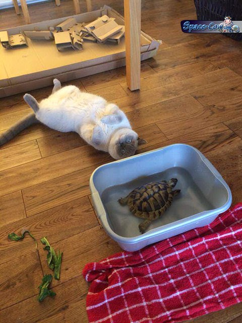 funny cat turtle picture