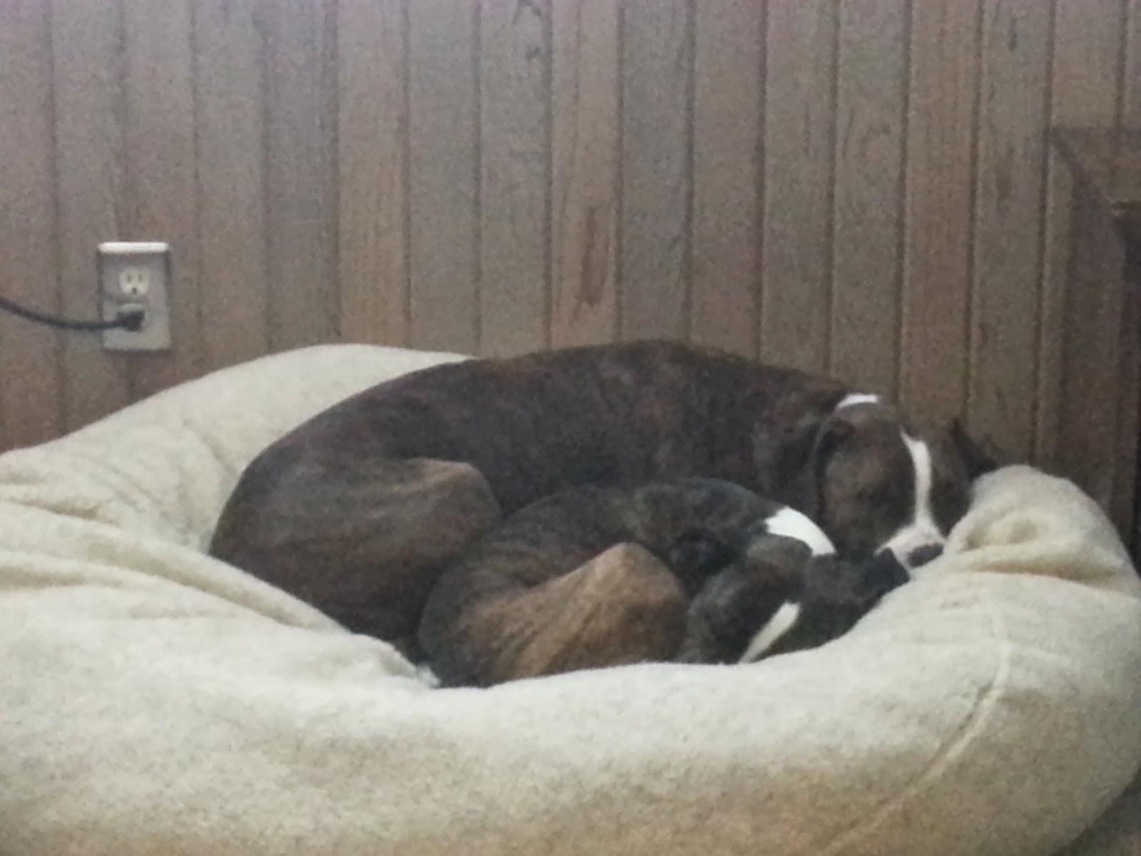 Erie-sisti-Bull: Edi & Tess s Favorite Things: Paus Berber Ball Bed