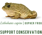 Frogs Need Our Help!