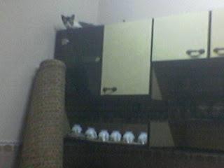 Bila Kucing aku takde kerja...