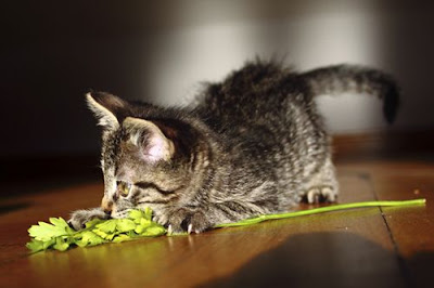 Photos of Cat