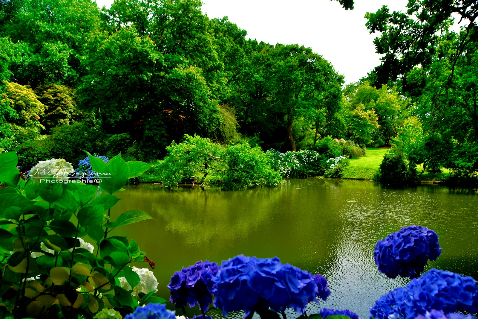 Mg royaume photos le jardin d 39 eden kerdalo dans les for Jardin kerdalo