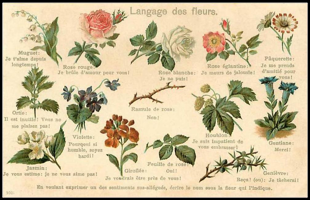 H raldie le langage des fleurs - Langage des fleurs iris ...
