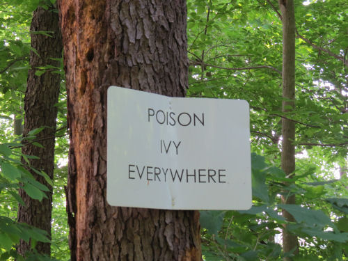 poison ivy sign