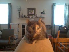 Sammy, Donna's cat