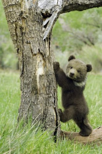 Funny Animals A Bear That Scares Easily