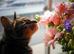 窓辺のお花ネコ