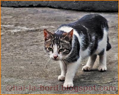 pisica la panda casa lorabella baile herculane