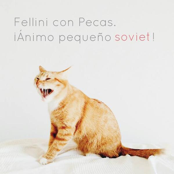 Fellini con #freepecas