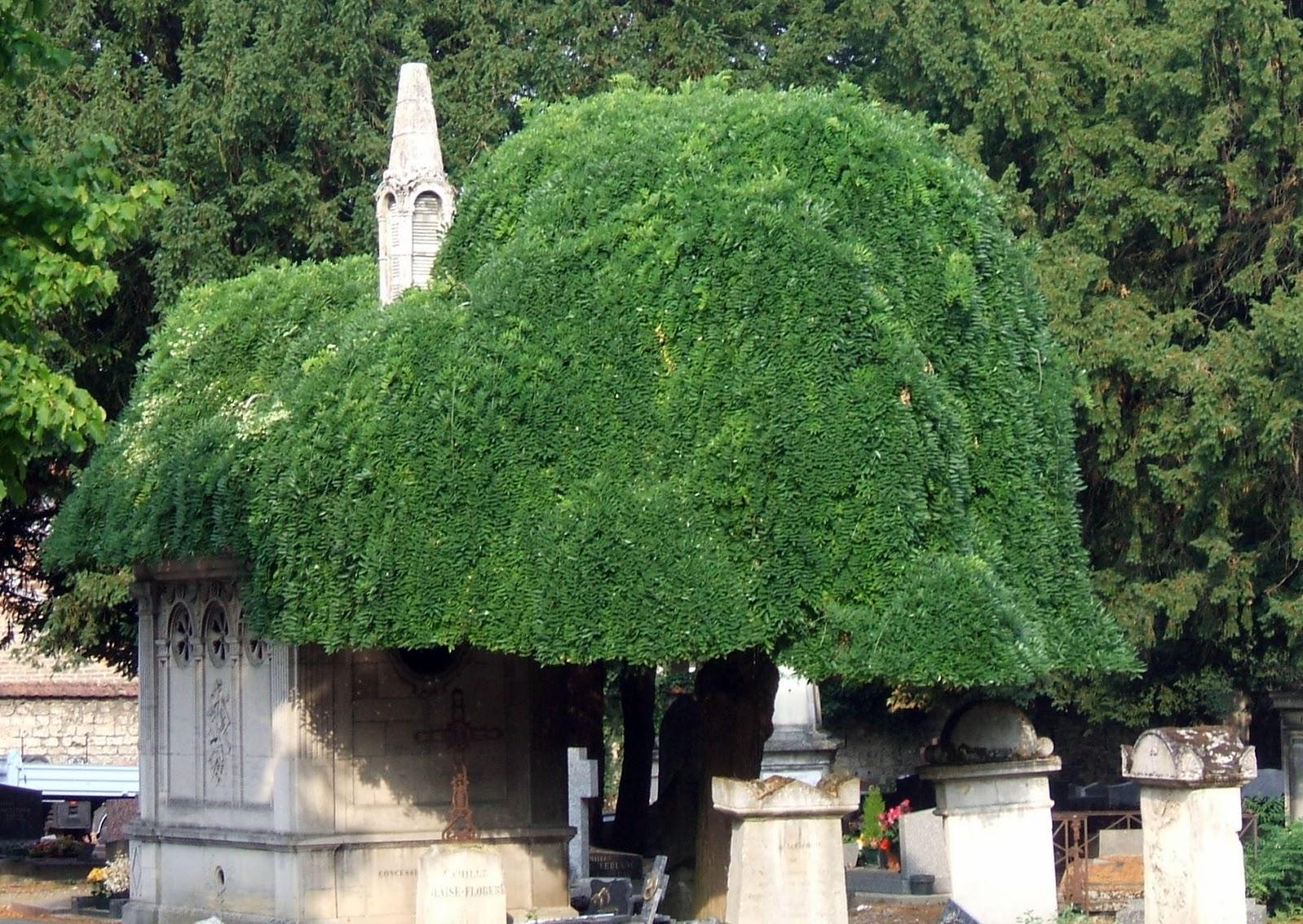 instants à l'infini : sophora japonica