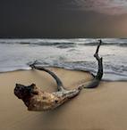 tronco restituito dal mare