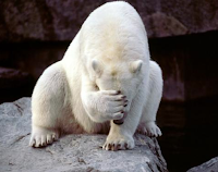 Polar Disgust